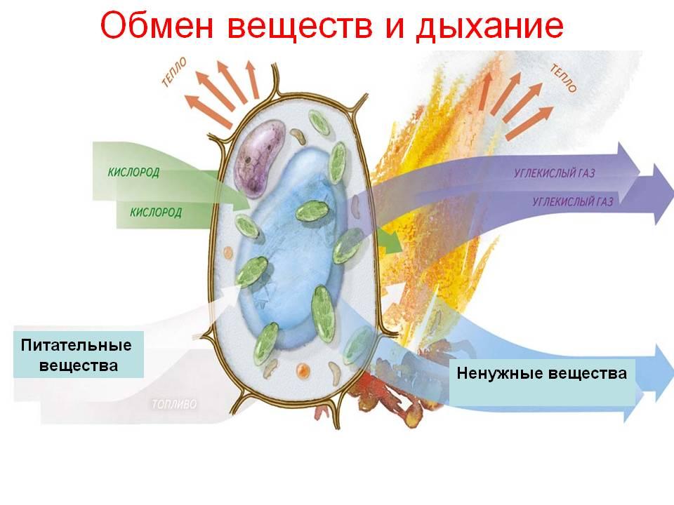 hello_html_m22b7a427.jpg