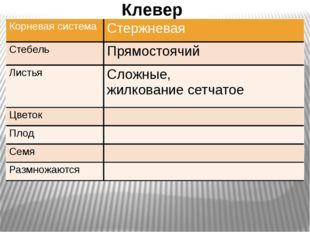 Клевер Корневая система Стержневая Стебель Прямостоячий Листья Сложные, жилк