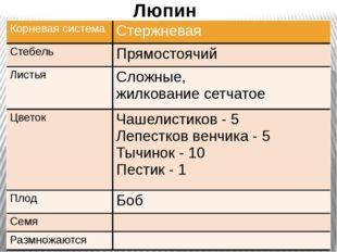 Люпин Корневая система Стержневая Стебель Прямостоячий Листья Сложные, жилко