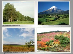 http://photo-ek.ru/photo/view/images/forest.jpg http://i.playground.ru/i/83/7