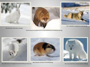 http://www.tepid.ru/images/arctic's-animal3.jpg http://info-bear-world.narod.