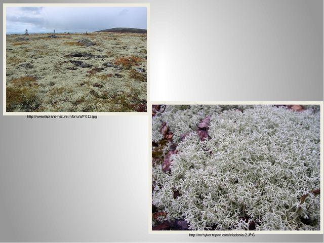 http://www.lapland-nature.info/ru/s/P013.jpg http://mrhyker.tripod.com/cladon...