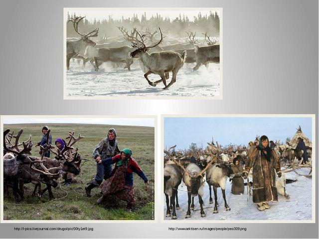 http://l-pics.livejournal.com/drugoi/pic/00ty1et9.jpg http://www.arktisen.ru/...