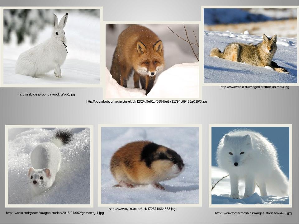 http://www.tepid.ru/images/arctic's-animal3.jpg http://info-bear-world.narod....