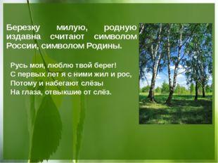Березку милую, родную издавна считают символом России, символом Родины. Русь