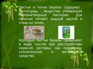 Листья и почки берёзы содержат фитонциды – вещества, убивающие болезнетворные