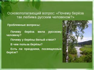 Основополагающий вопрос: «Почему берёза так любима русским человеком?» Пробле