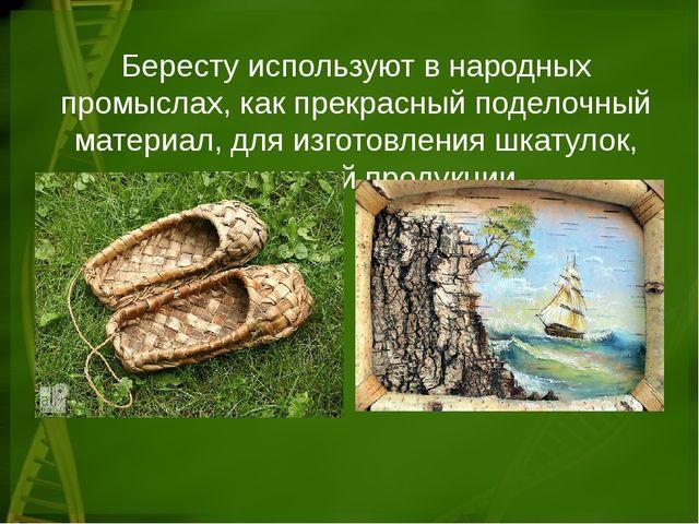 Бересту используют в народных промыслах, как прекрасный поделочный материал,...