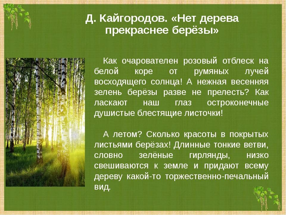 Д. Кайгородов. «Нет дерева прекраснее берёзы» Как очарователен розовый отблес...