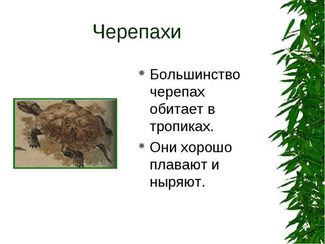 Черепахи Большинство черепах обитает в тропиках. Они хорошо плавают и ныряют.