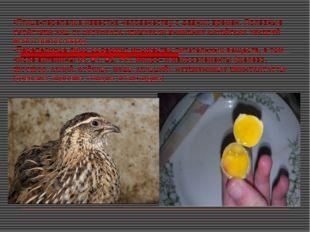 Птица-перепелка известна человечеству с давних времен. Полезные свойствам яиц