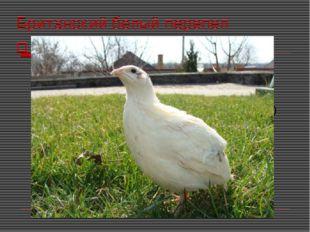 Британский белый перепел Это мясная порода. Они имеют белое оперение (иногда