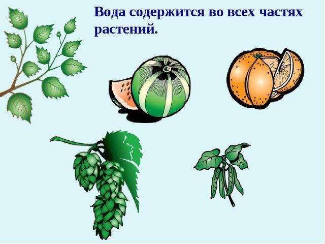Вода содержится во всех частях растений.