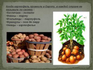 Когда картофель привезли в Европу, в каждой стране ее называли по-своему: Ан