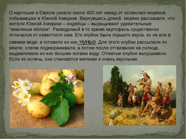О картошке в Европе узнали около 400 лет назад от испанских моряков, побывавш...
