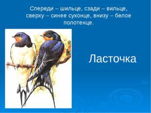 Спереди – шильце, сзади – вильце, сверху – синее суконце, внизу – белое полот