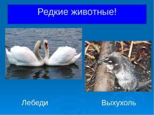 Лебеди Выхухоль Редкие животные!