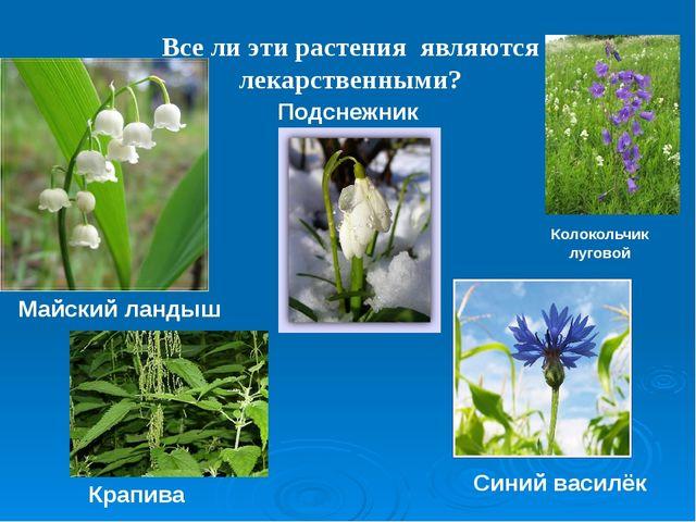 Все ли эти растения являются лекарственными? Майский ландыш Подснежник Крапив...