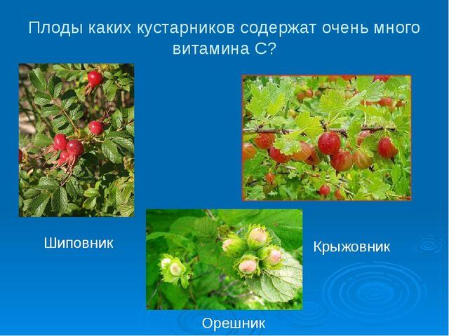 Плоды каких кустарников содержат очень много витамина С? Шиповник Крыжовник О...
