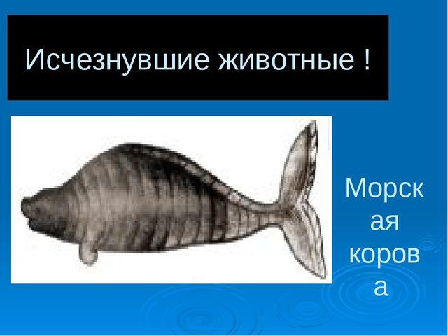 Исчезнувшие животные ! Морская корова