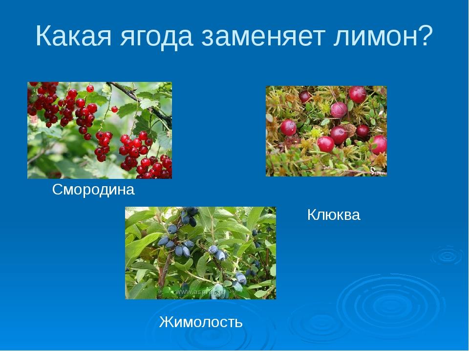 Какая ягода заменяет лимон? Смородина Клюква Жимолость