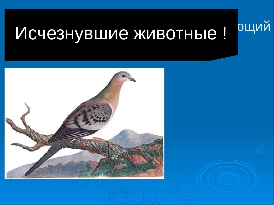 Странствующий голубь Исчезнувшие животные !