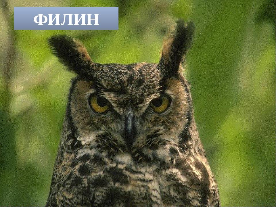 Угадайте, что за птица света яркого боится. Клюв крючком, глаза как плошки, д...