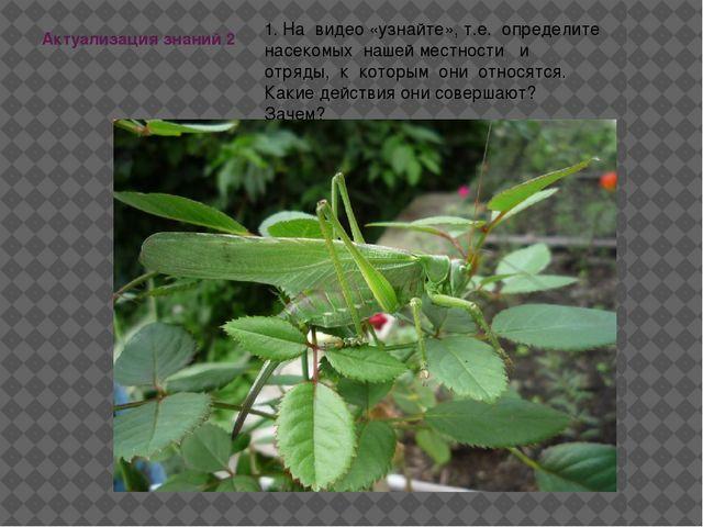 Актуализация знаний 2 1. На видео «узнайте», т.е. определите насекомых нашей...