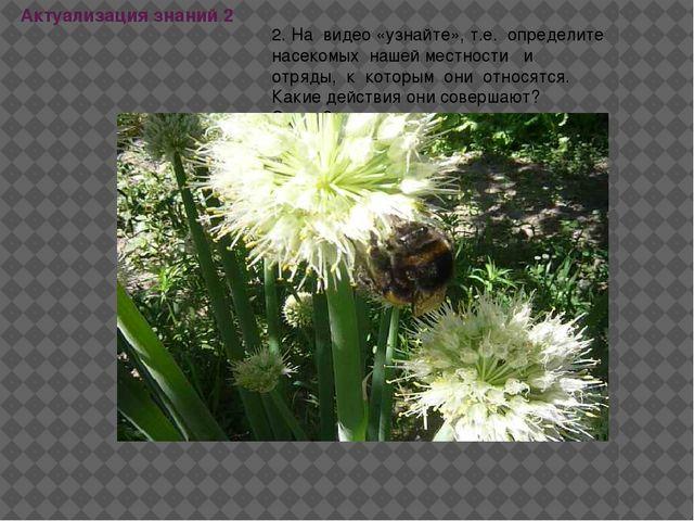 Актуализация знаний 2 2. На видео «узнайте», т.е. определите насекомых нашей...