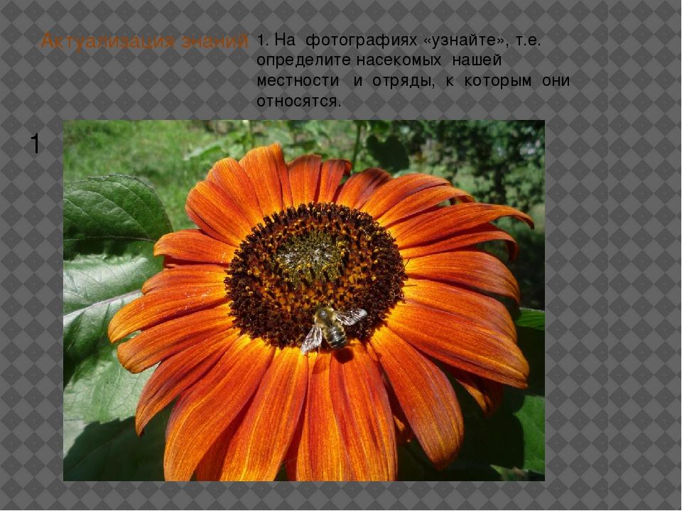 Актуализация знаний 1. На фотографиях «узнайте», т.е. определите насекомых на...