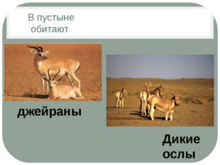 В пустыне обитают Дикие ослы джейраны