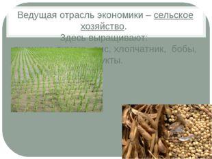 Ведущая отрасль экономики – сельское хозяйство. Здесь выращивают: пшеницу, яч