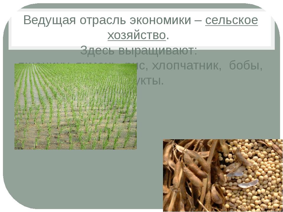 Ведущая отрасль экономики – сельское хозяйство. Здесь выращивают: пшеницу, яч...