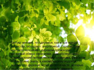 Бытует мнение, что деревья, как и все живые существа, обладают энергетикой.