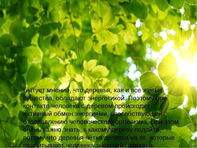 Бытует мнение, что деревья, как и все живые существа, обладают энергетикой....