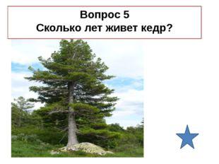 Правильный ответ 5 800 лет