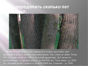 Как определить сколько лет дереву? Можно и приблизительно определить возраст