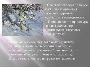Основная цель осенней покраски – защитить деревья от зимнего оледенения и от