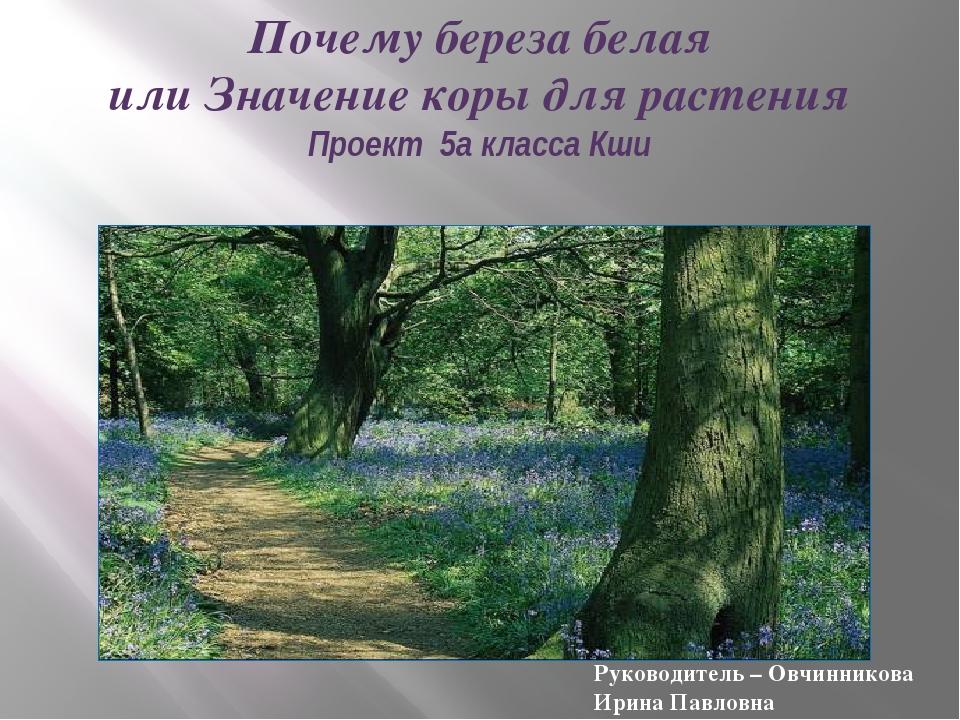 Почему береза белая или Значение коры для растения Проект 5а класса Кши Руков...