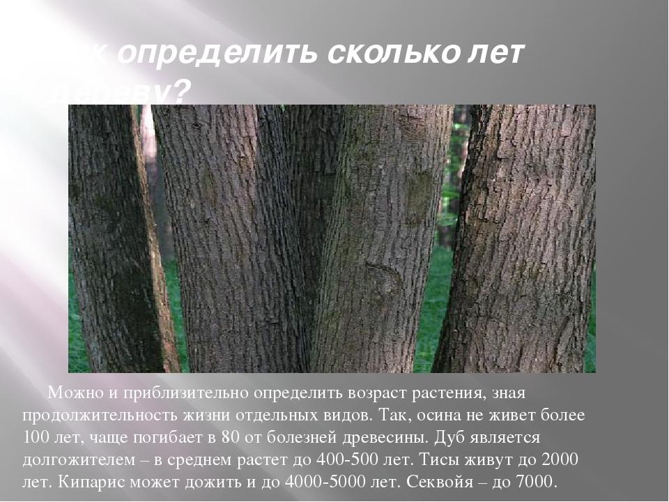 Как определить сколько лет дереву? Можно и приблизительно определить возраст...
