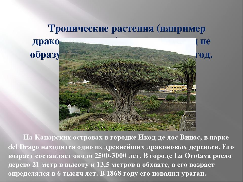 Тропические растения (например драконово дерево) годичных колец не образуют,...