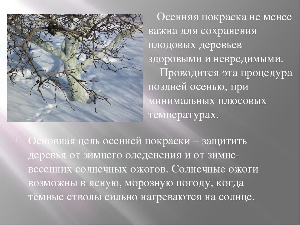 Основная цель осенней покраски – защитить деревья от зимнего оледенения и от...