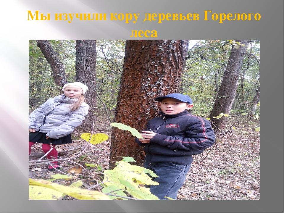 Мы изучили кору деревьев Горелого леса