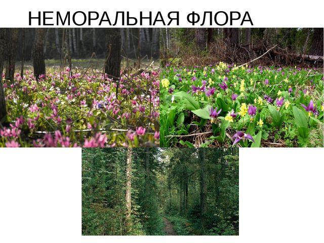 НЕМОРАЛЬНАЯ ФЛОРА
