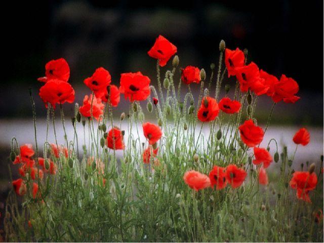 Красная энергия - цвет гармонии и равновесия Красный цвет оказывает разогрева...