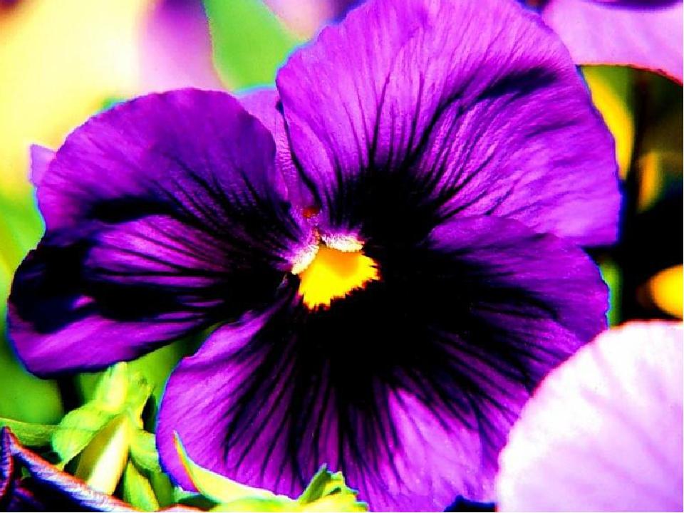Фиолетовая энергия - цвет подсознания Фиолетовый цвет обладает особой внутрен...