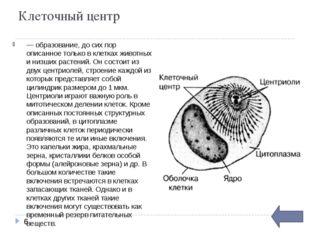 ЭПС(эндоплазматическая сеть) Эндоплазматическая сеть представляет собой мног