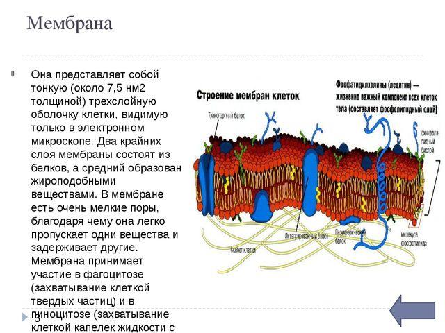 Цитоплазма представляет собой сложную коллоидную систему. Ее строение: прозр...