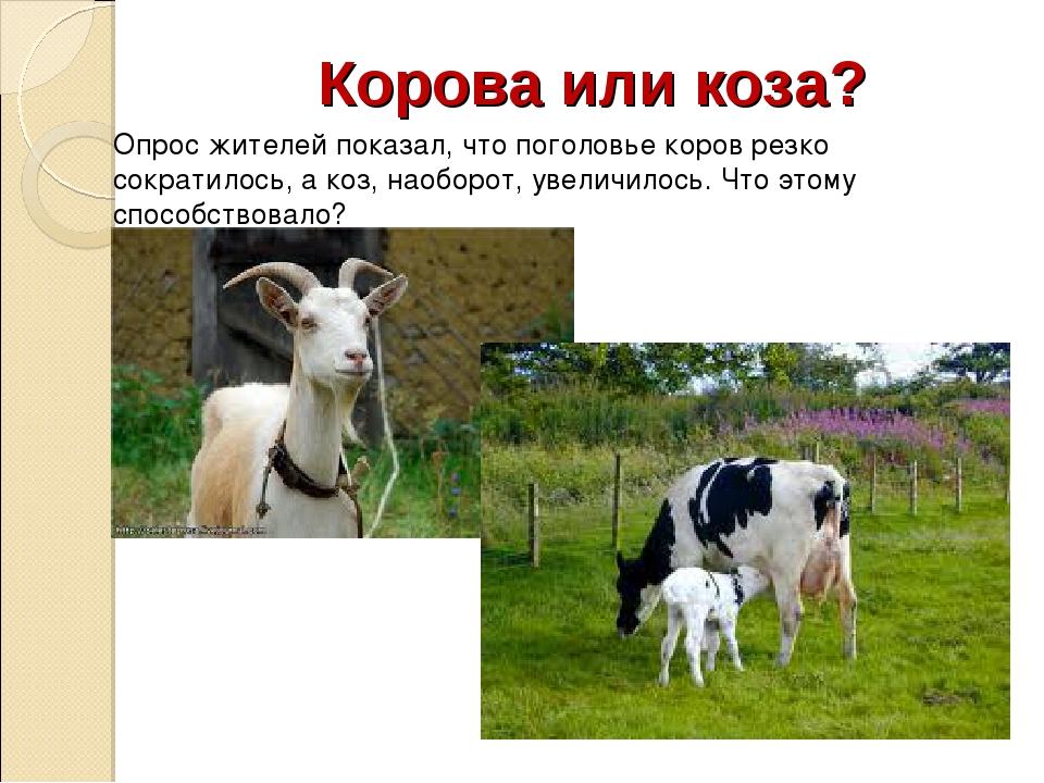 Корова или коза? Опрос жителей показал, что поголовье коров резко сократилось...