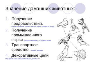 Значение домашних животных: Получение продовольствия. Породы кроликов. Кролик